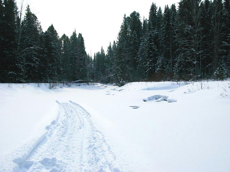 река Койва зимой