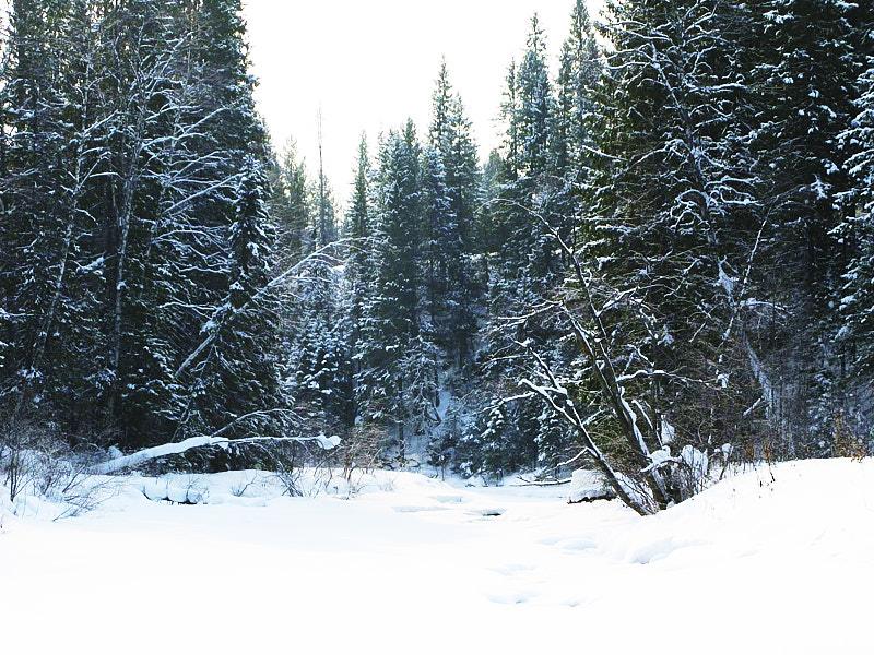 Зимний берег Койвы