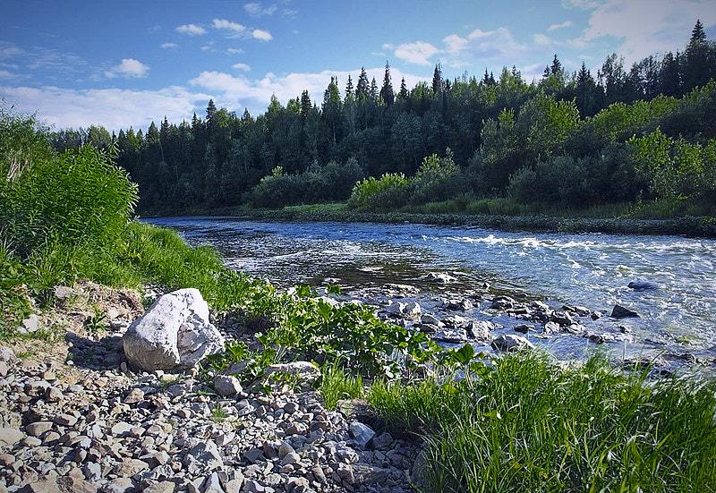 Река Койва летом