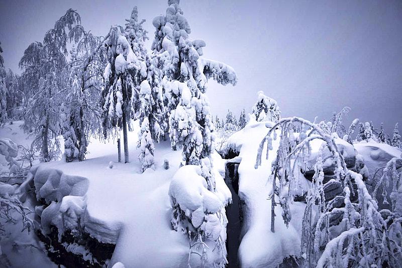 Зимняя тайга Каменного городе