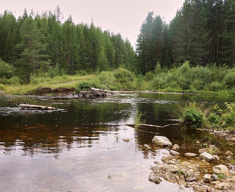 Река Тошемка летом